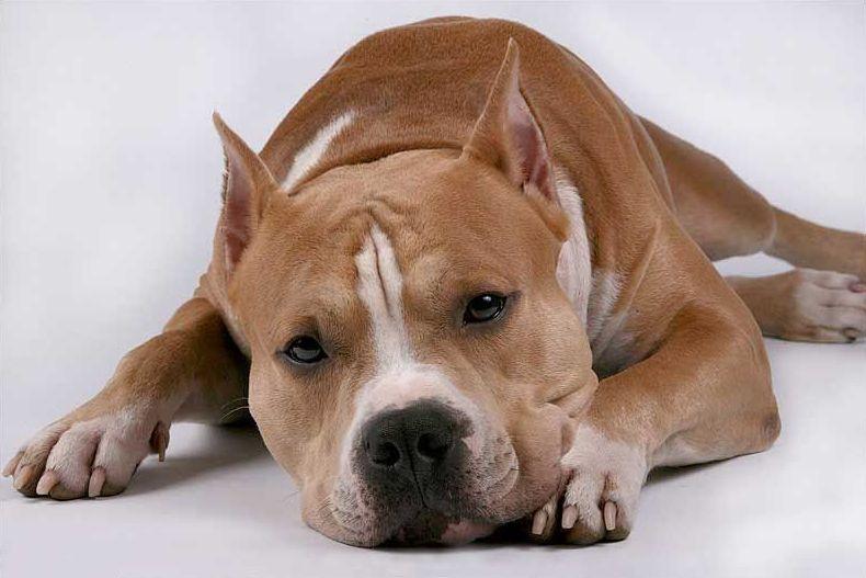 Болезни, которые переносят собаки