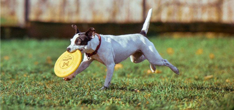 Как научить щенка команде апорт?