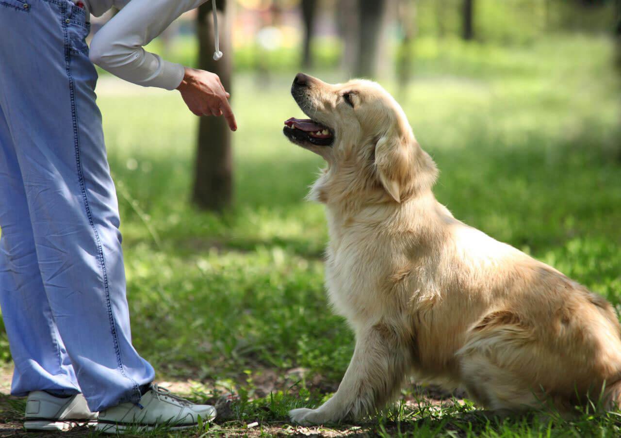 Как научить собаку аджилити?