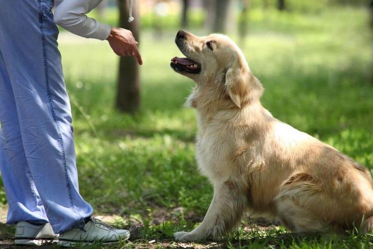 Как правильно тренировать щенка?