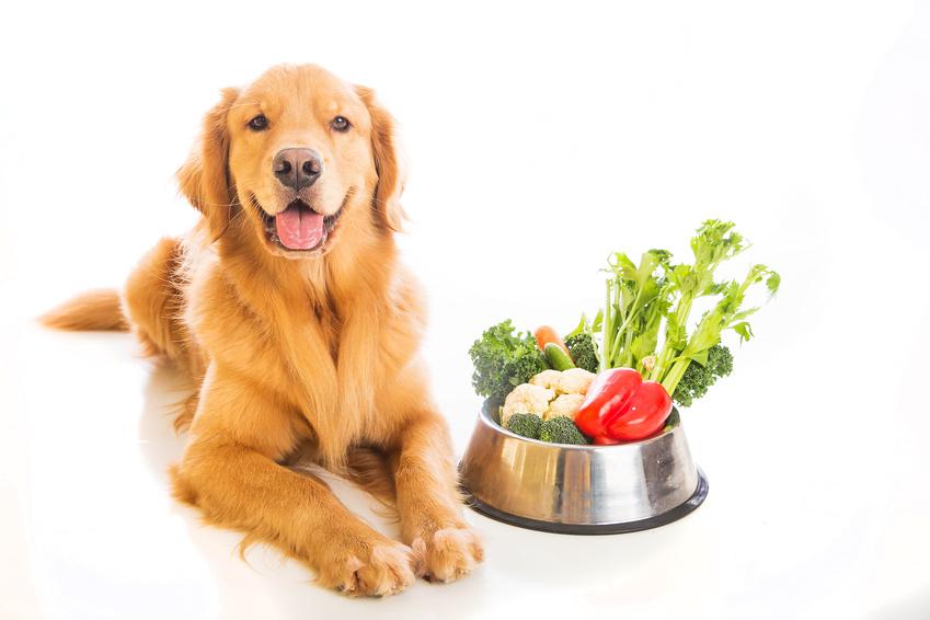 Какие фрукты и овощи можно давать беременной собаке?