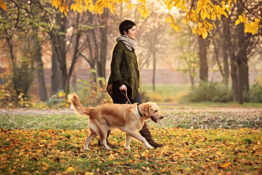 Как должен вести себя человек, гуляя с собакой?
