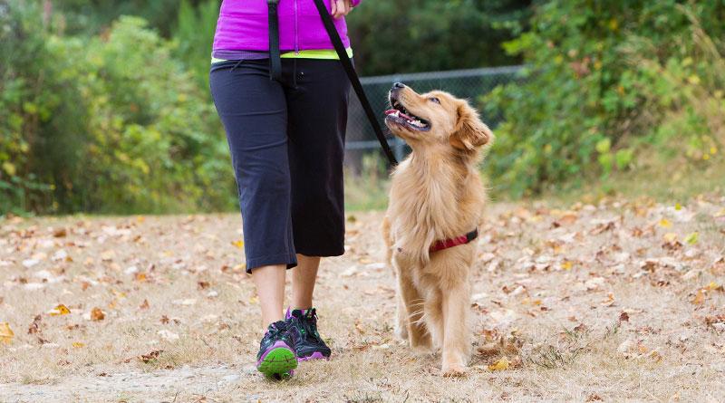 Как научить собаку с поводком?