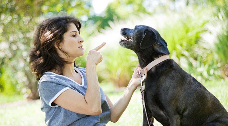 Как научить взрослую собаку команде Фу и Нельзя?