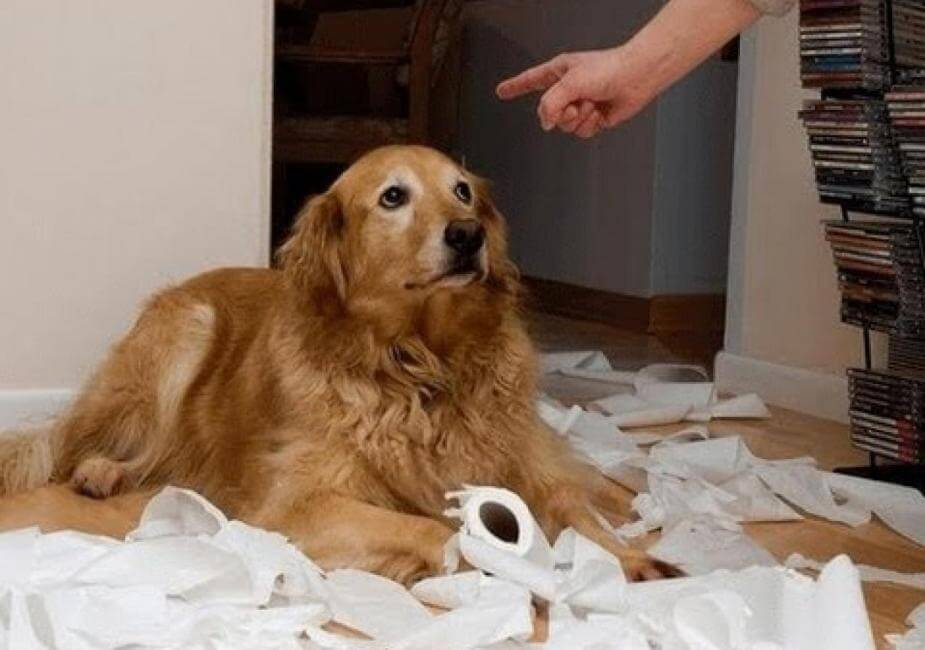 Как нельзя себя вести во время дрессировки собаки?