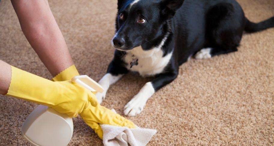 Как отучить собаку гадить в доме?