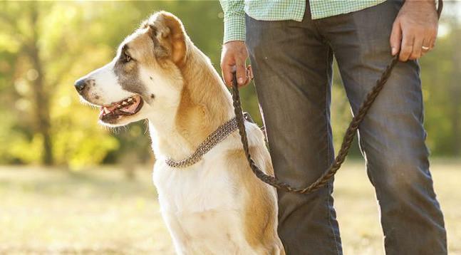 Как выбрать поводок для собаки?