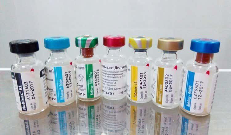 Лучшие вакцины от бешенства для собак