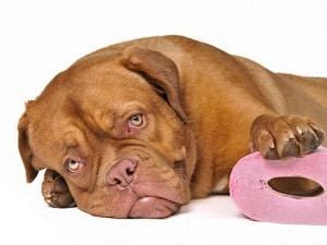 Понос у собаки - Что делать и как лечить в домашних условиях