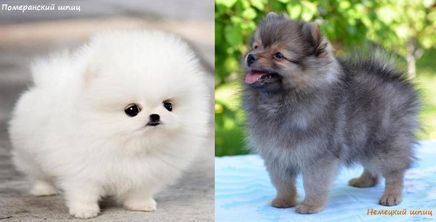 Что нужно знать при выборе щенка?