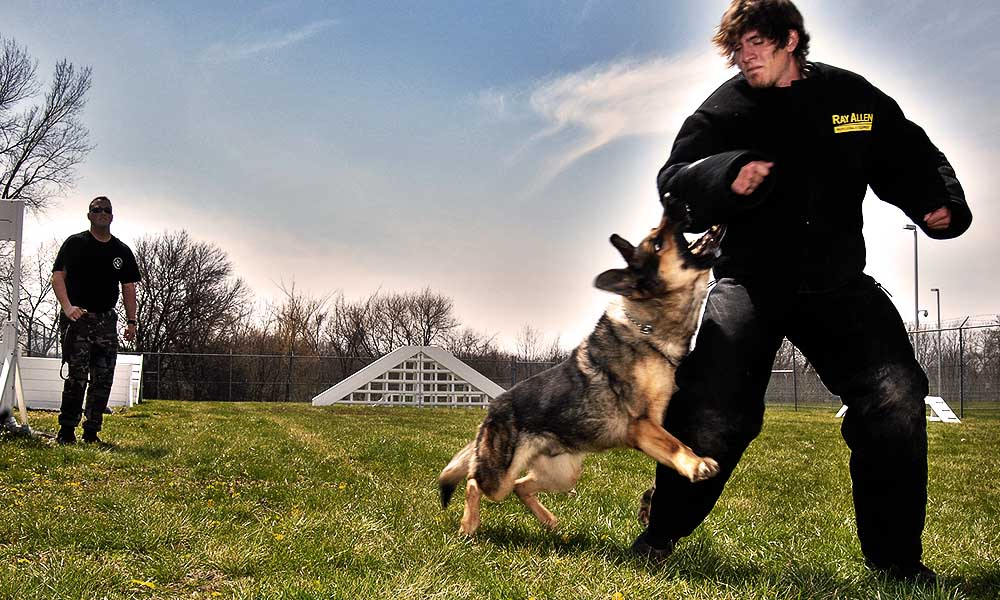 Картинка нападение собаки на человека