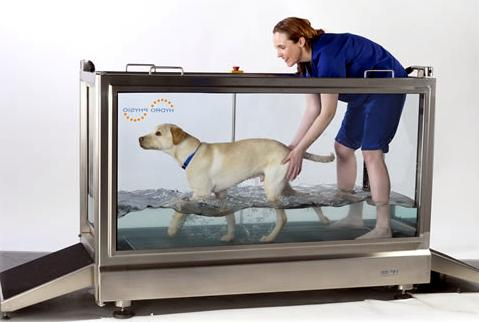 Гидротерапия для собак