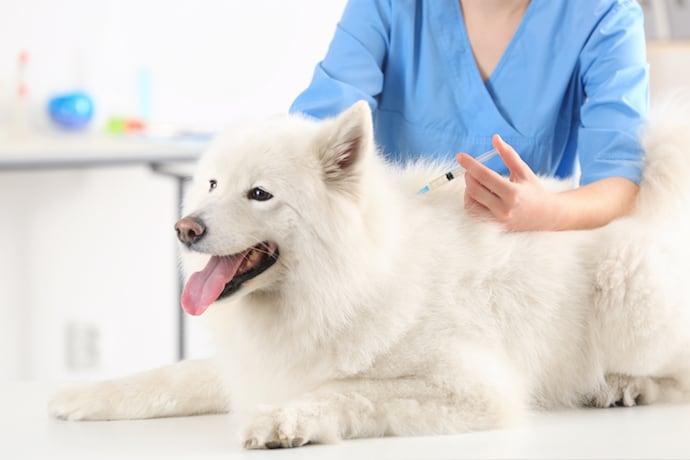 Как лечить собаку?
