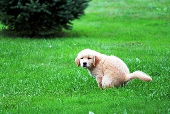 Как приучить щенка?