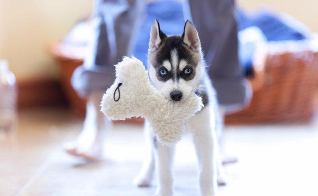 Основные правила воспитания щенка