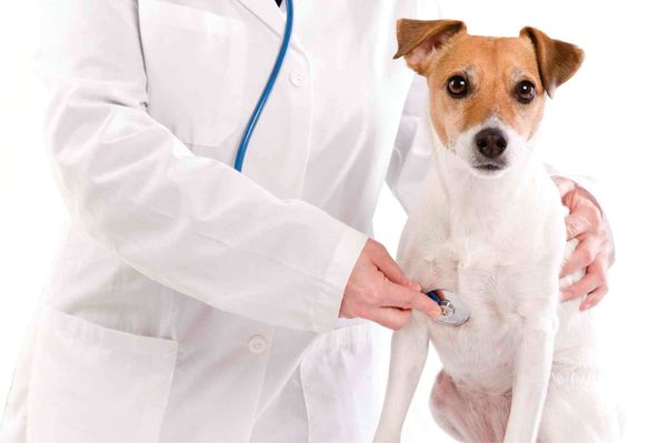 Подготовка собаки к операции