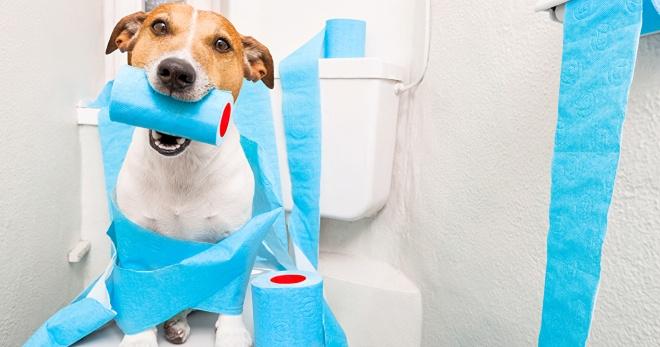 Симптомы диареи у собак