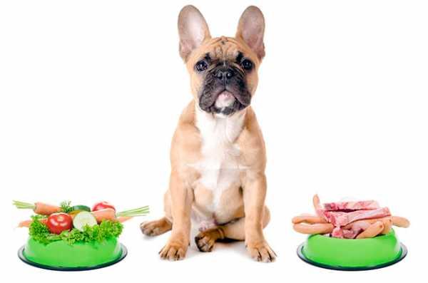Чем кормить щенка французского бульдога?