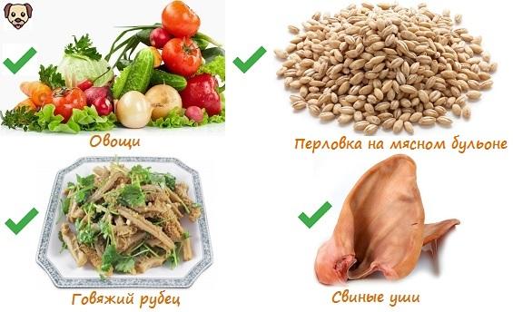Чем кормить взрослого французского бульдога?
