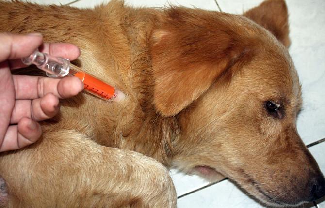 Как лечить гипогликемию у собак?