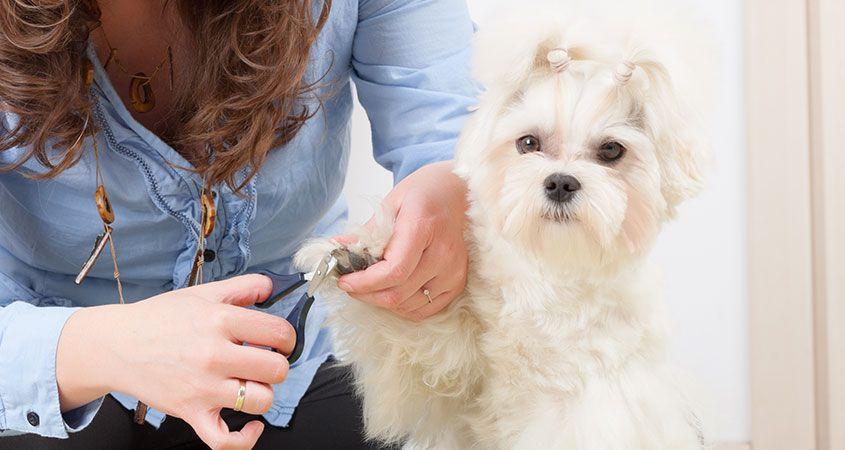 Как подстричь ногти собаке?