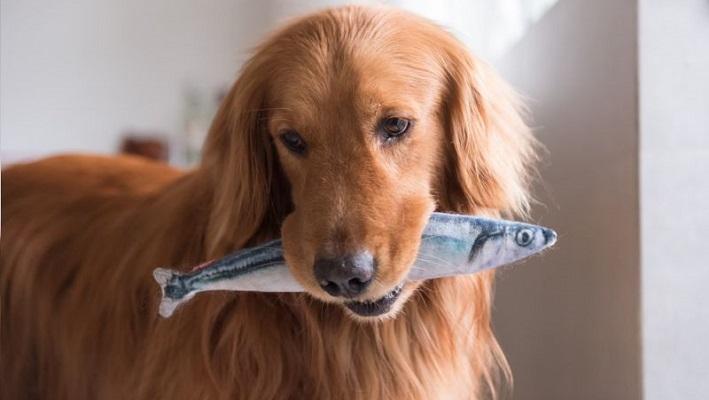 Какую рыбу можно давать собаке?