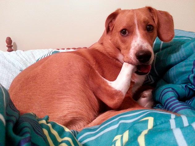 По каким причинам собака может грызть свои лапы?