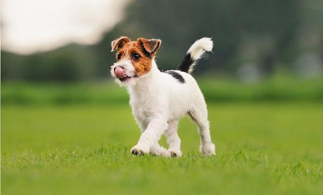 Почему так важно правильно подобрать имя собаке?