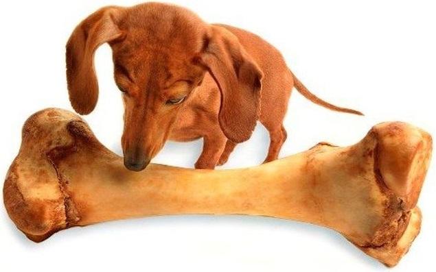 Польза куриных костей для собак