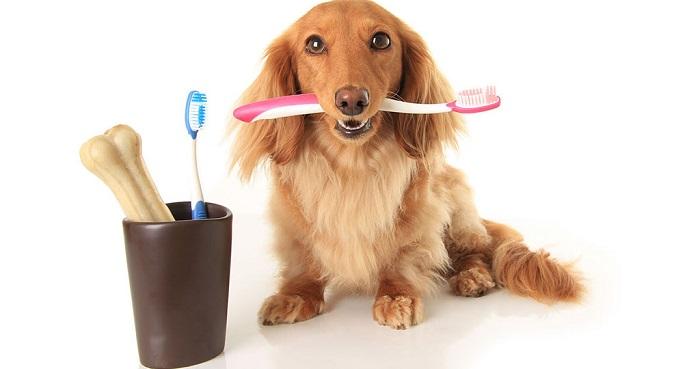 Профилактика зубного камня у собак