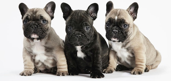 Сколько стоит щенок?