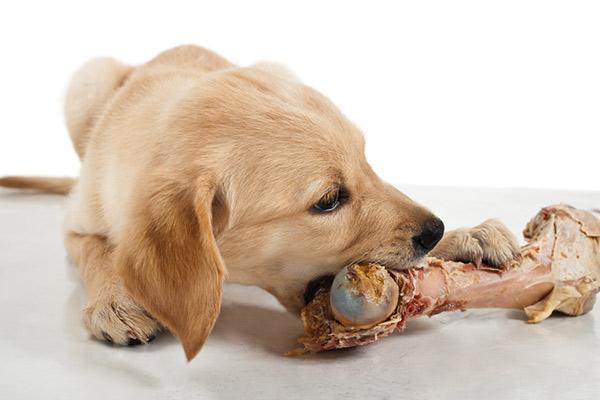 Чем собака может подавиться?