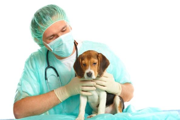 Что делать, если пес не может откашляться?