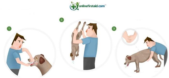 Что делать, если собака подавилась?