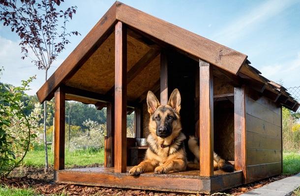 Необходимые условия для сторожевой собаки