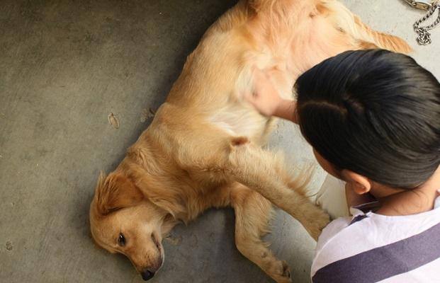 Лечение вздутия живота у собак