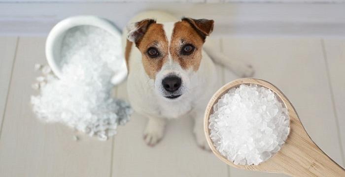 Нужна ли собакам соль?