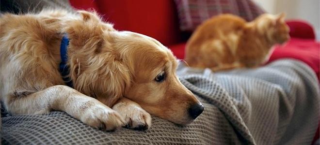 Параметры собаки для квартиры
