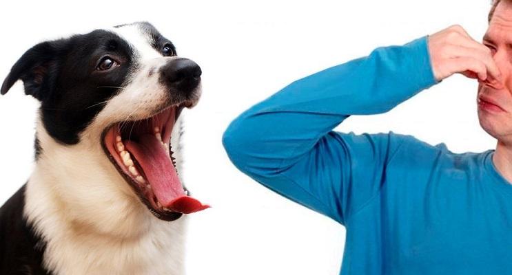 Почему у собаки изо рта пахнет тухлятиной?