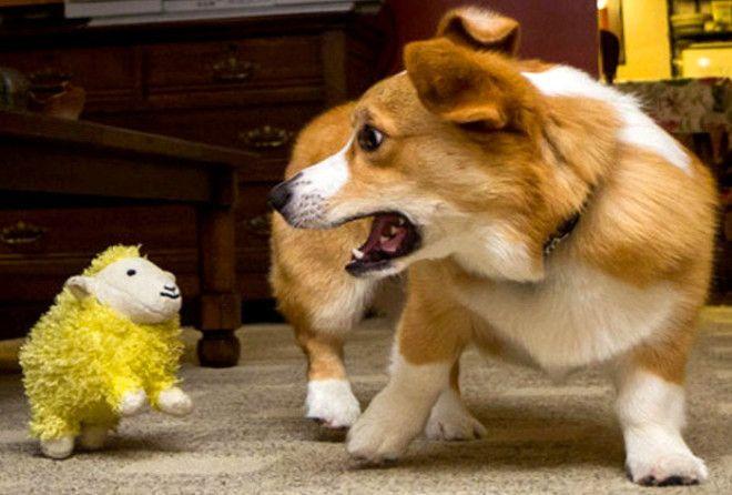 Что делать, если собака икает?