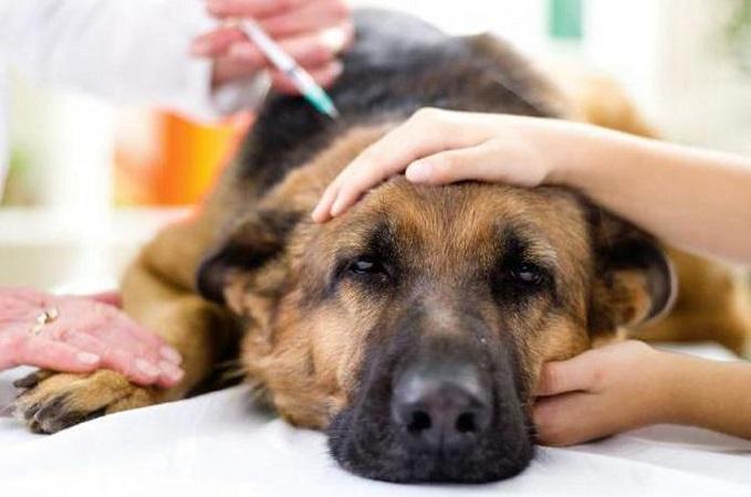 Лечение коронавируса у собак