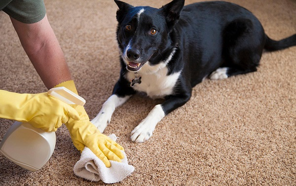 Причины недержания мочи у собак