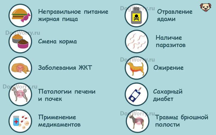 Причины панкреатита у собак