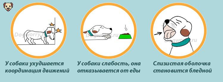 Симптомы отравления крысиным ядом у собак