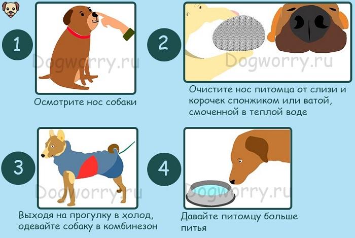 Как лечить насморк у собак в домашних условиях?