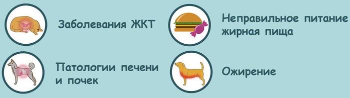 Причины мочекаменной болезни у собак