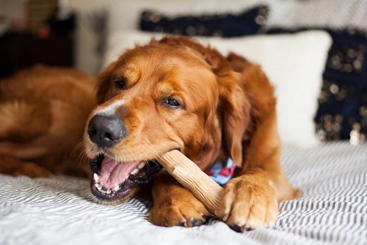 Причины болезни у собак