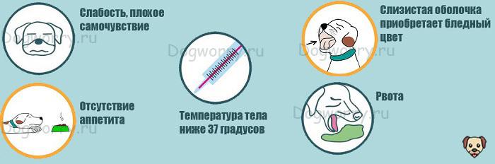 Симптомы кишечной непроходимости у собак