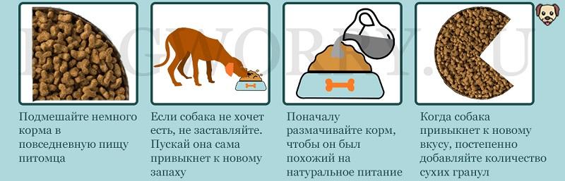 Что делать, если собака не ест сухой корм?