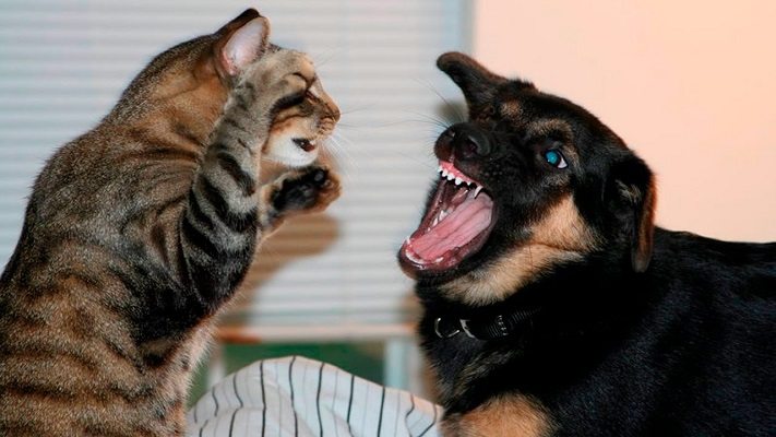 Как подружить кошку с собакой?